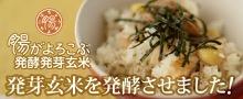 腸がよろこぶ発酵発芽玄米